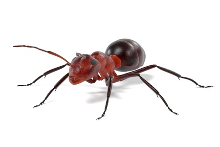 realistic 3d render of ant