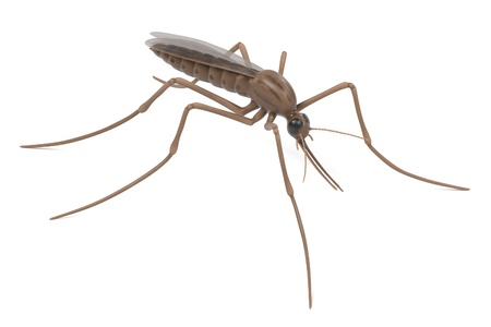 anopheles: realistic 3d render of anopheles gambiae