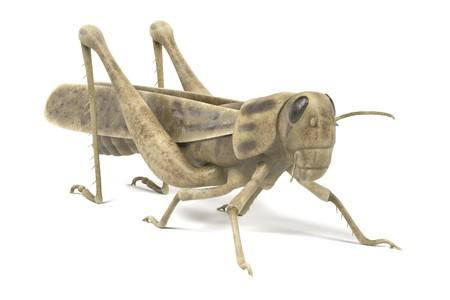 realistic 3d render of grasshopper