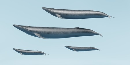 Realistic 3D Render of Blue Whales