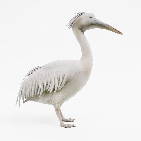 Realistic 3D Render of Pelican Banco de Imagens - 91610140