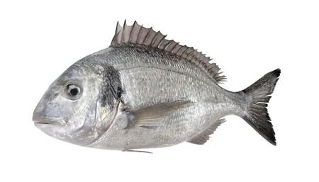 Realistic 3D Render of Gilthead Bream Fish Reklamní fotografie - 91610316