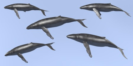 Realistic 3D Render of Humpback Whale Stock Photo