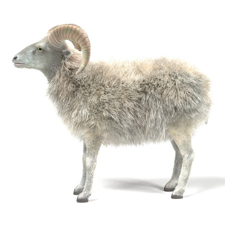 Realistic 3D Render of Ram Stock Photo