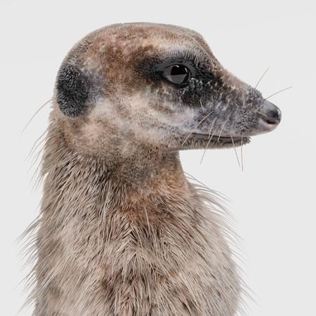 Realistic 3D Render of Meerkat Stock Photo - 91611701