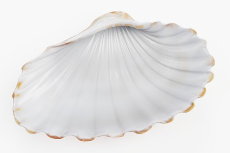 Realistic 3D Render of Clam