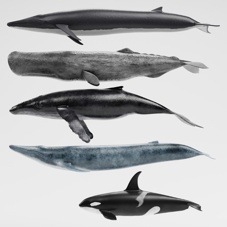 Realistic 3D Render of Whales Collection Stock Photo