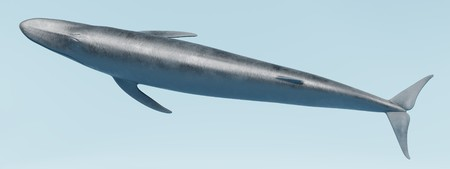 Realistic 3D Render of Blue Whale