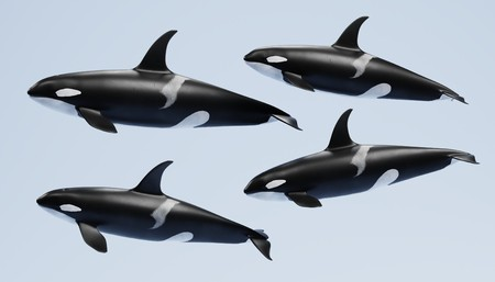 Realistic 3D Render of Killer Whale