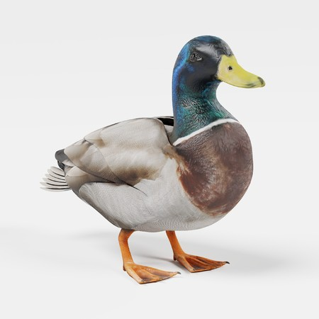 Realistic 3D Render of Duck Stock Photo
