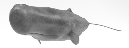 Realistic 3D Render of Sperm Whale