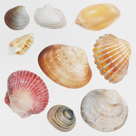 Realistic 3D Render of Seashells