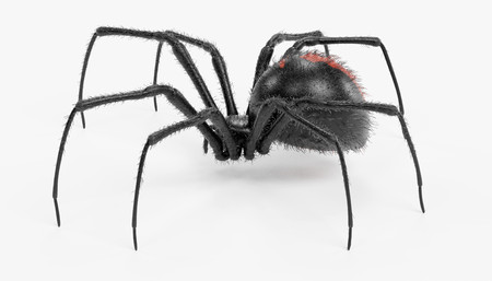 Realistic 3D Render of Black Widow Spider