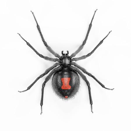Realistische 3D-weergave van Black Widow Spider