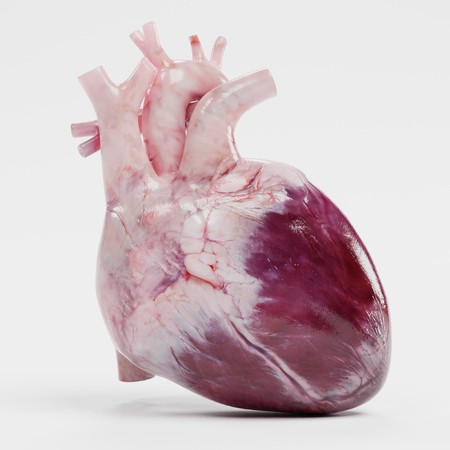 Realistic 3d Render of Human Heart Stock fotó