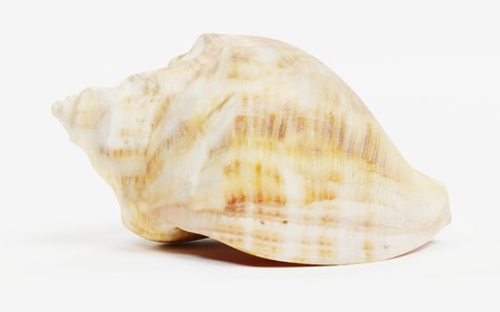 Realistic 3D Render of Shell Stock Photo