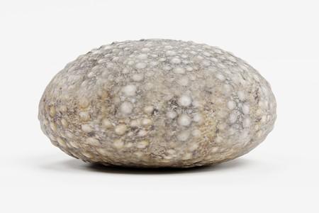 Realistic 3D Render of Sea Urchin