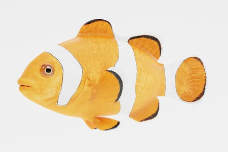 Realistic 3d Render of Clownfish Stock Photo - 100045964