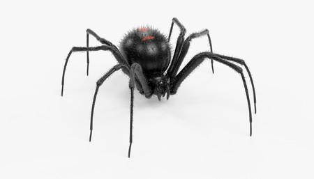 realista 3d de negro araña viuda