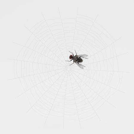 3D Render of Fly Trapped on Cobweb 写真素材