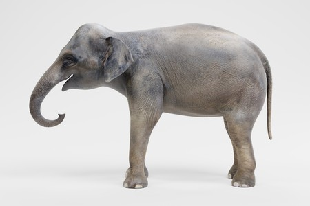 Realistic 3D Render of Asian Elephant - Female Фото со стока