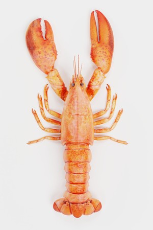 Realistic 3D Render of Cooked Lobster