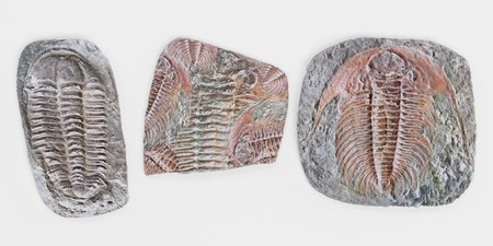 Realistic 3D Render of Trilobite Fossils