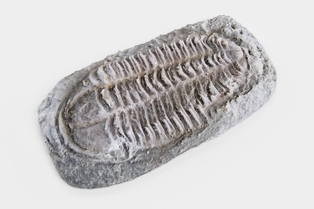 Realistic 3D Render of Trilobite Fossil