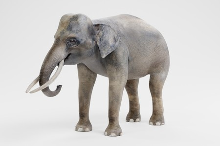 Realistic 3D Render of Asian Elephant - Male