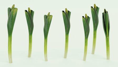Realistic 3D Render of Leek Vegetable