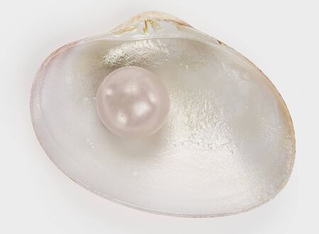 Realistic 3D render of Clam with Pearl