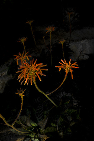 Mysterious Red Flowers Growing In The Dark