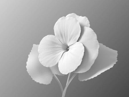 White Synthetic Flower Viola On Gradient Background Standard-Bild