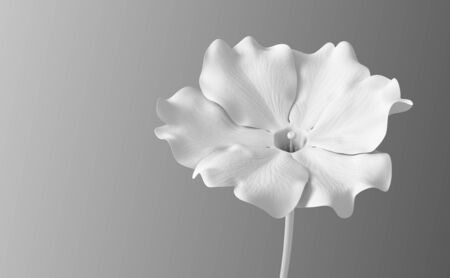 White Synthetic Flower Viola On Gradient Background