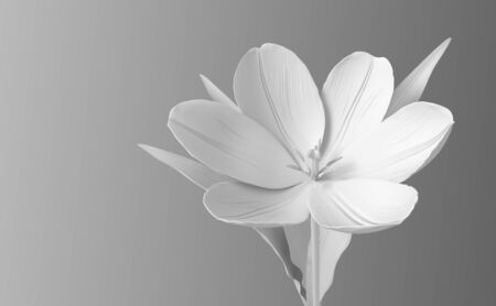 White Synthetic Flower Tulip On Gradient Background