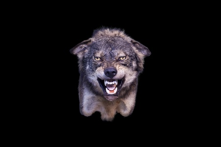 mean: agressive wolf stuffed