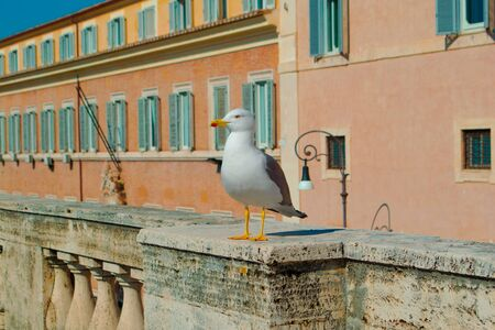 Seagull standing on the railing in rome