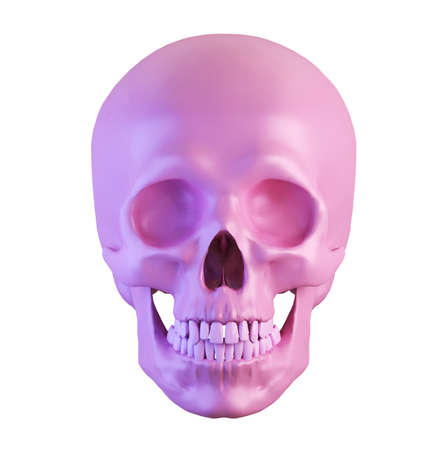 human pink skull isolated on white, front view, 3d render