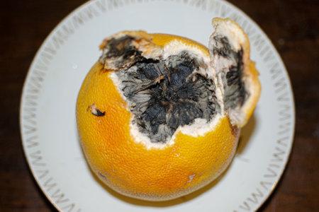 one damaged rotten grapefruit on white background