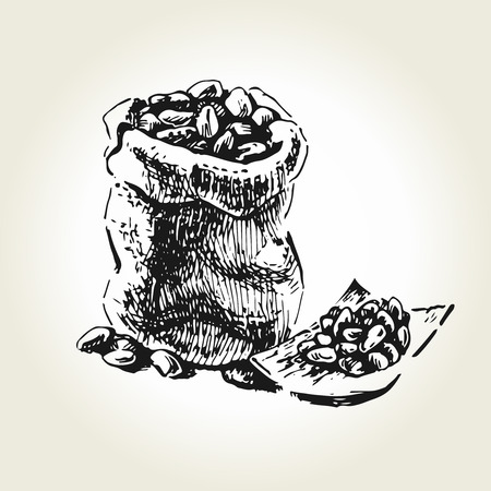 Hand drawn cacao beans in hessian bag. Vector illustration Illustration