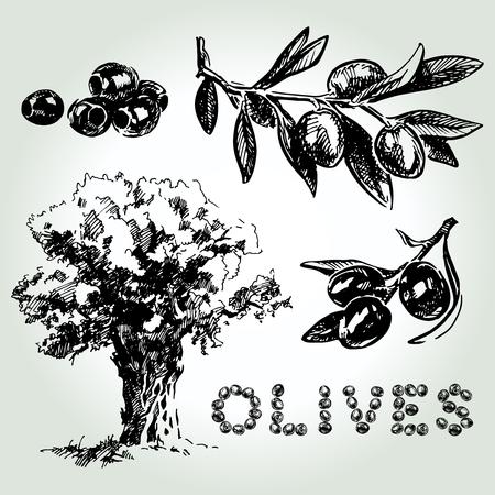 Hand drawn sketch olives set. Olive oil. For labels, pack. Vector illustration. Illustration