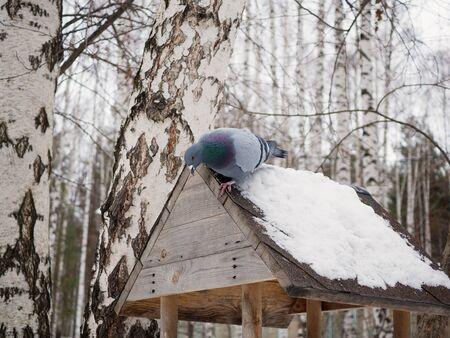 Birds in winter in the feeder