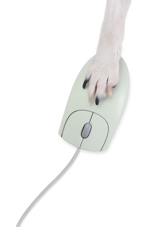 A close up of a dogs paw moving a computer mouse Zdjęcie Seryjne