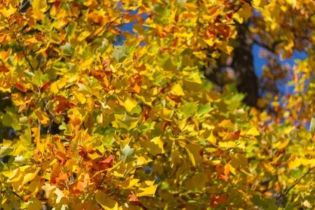Autumn leafs close Stock Photo