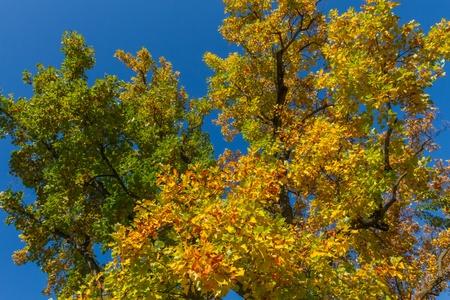 Autumn tree detail Stock Photo