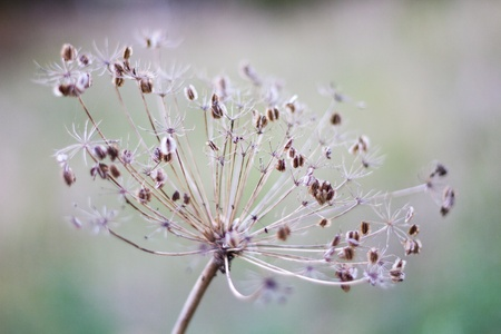 Dry plant with depth of field Stock Photo