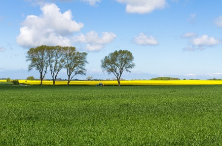 Corn field with trees blue sky and tractor Stock Photo