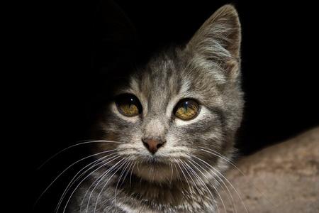 Grey cat very shy half in the shadow
