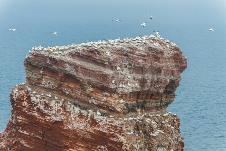 Top of the Lange Anna on Helgoland with many birds photo
