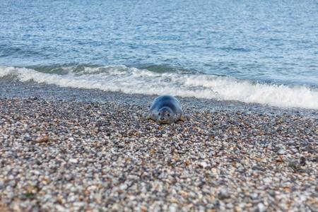海から来るヘルゴラント砂丘のシールします。